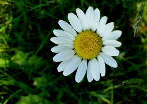 Dors petite fleur
