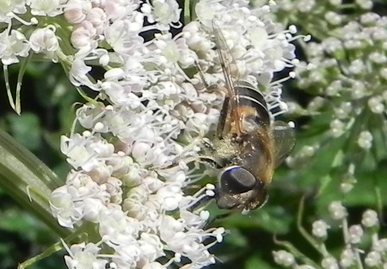 les insectes du jour !