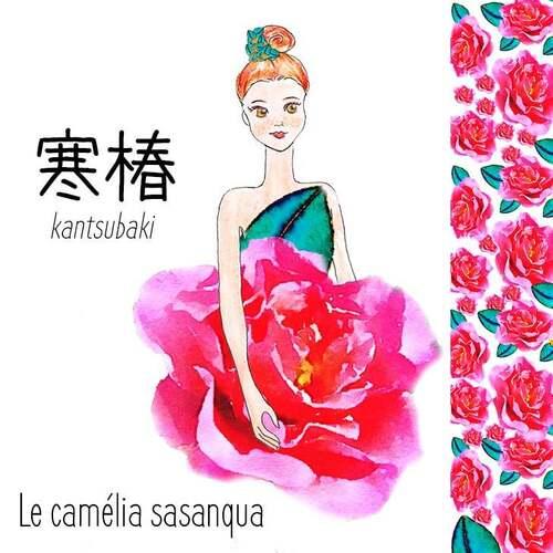 Fleurs cultivées : Camélia