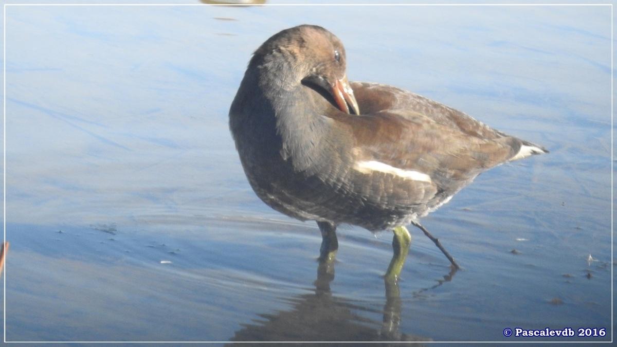 Réserve ornitho du Teich - Octobre 2016 - 4/11