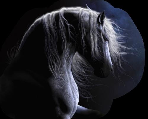tubes chevaux
