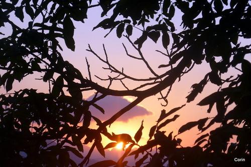 Soleil du soir