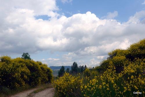 Roquefort 12 : le chemin des genêts et des chardons