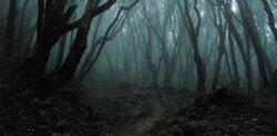 Promenade en forêt - Alexandre Hardoin