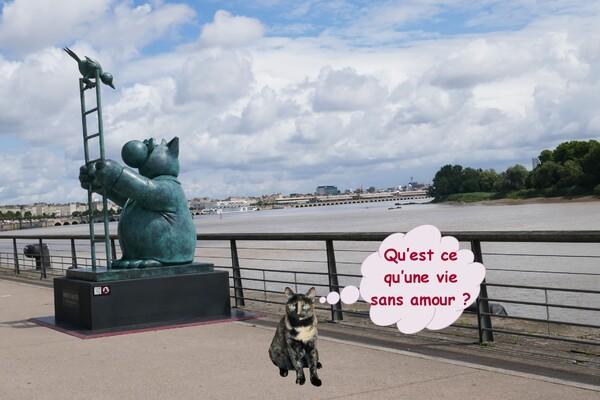 Le chat déambule sur les quais de Bordeaux (3)