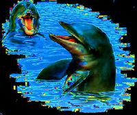 *** Dolphin-Fun ***
