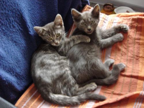 Dernière visite avant adoption