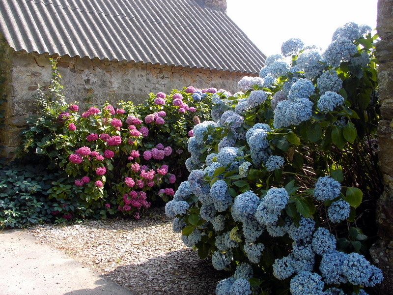 Le jardin commence à fleurir!