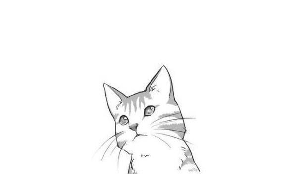 """Résultat de recherche d'images pour """"manga cat"""""""