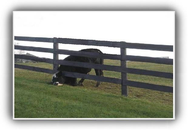 Blague : La vache !