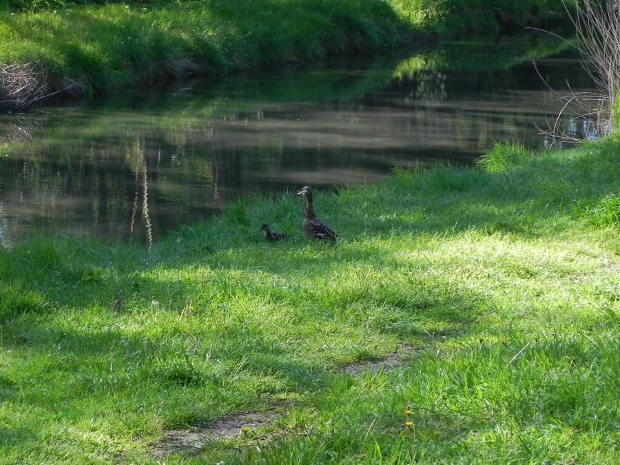 les animaux du parc à La Rochelle