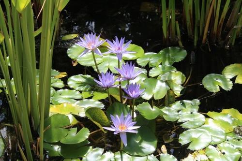 Fleurs du parc de Chaumont