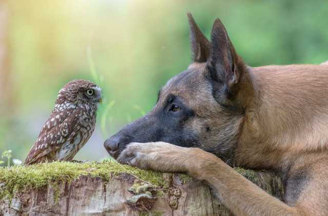 owl-7