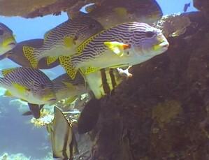 Plongee-Mickaelmas-Cay-0--43-.jpg