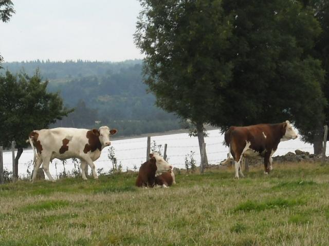 Naussac : un pays rural !