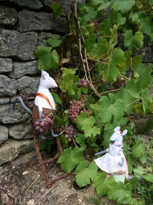 Vendanges à Chèvre-Roche