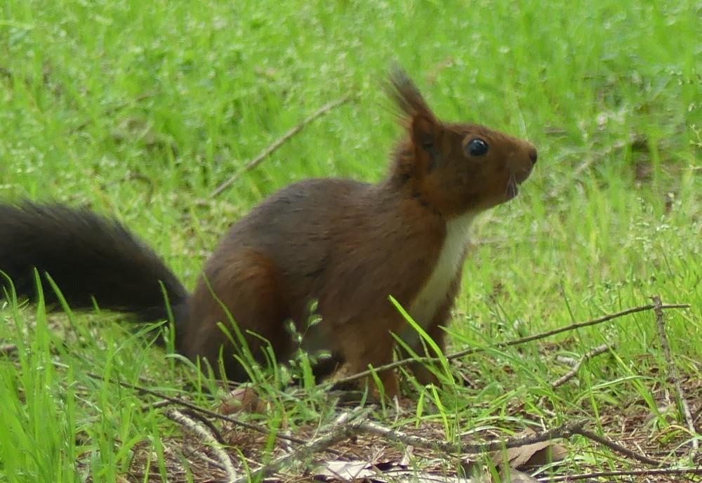 Les écureuils de la forêt de cyprès chauves...