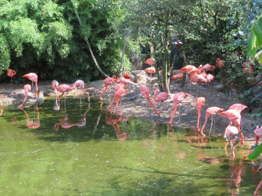 Le zoo de la Boissière-du-Doré