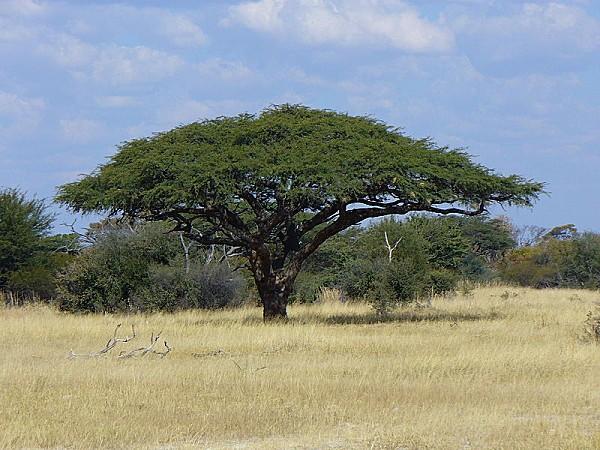 800px-Tree9