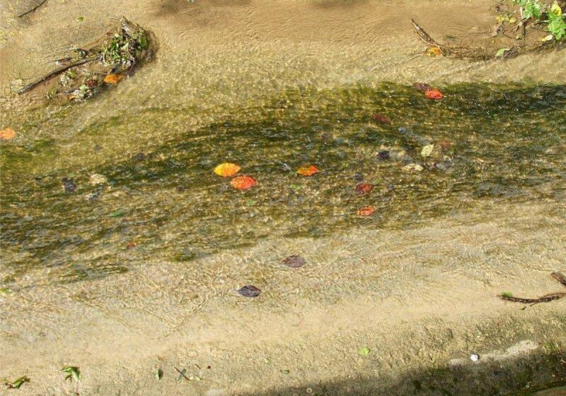 feuilles-ruisseau.jpg