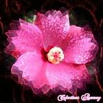 Tag Fleur