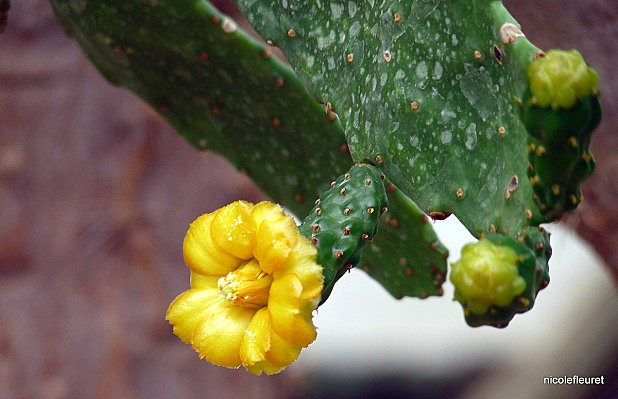 cactusavril-2010-422--18-.jpg