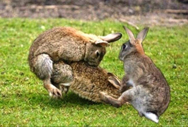 Calendrier républicain/jour du lapin