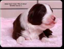 ♥ les Bébés de Heart Vixen♥ *fille d' Athos *