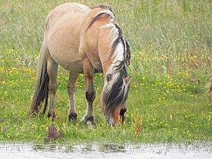 Albert-Nikon_cheval.jpg