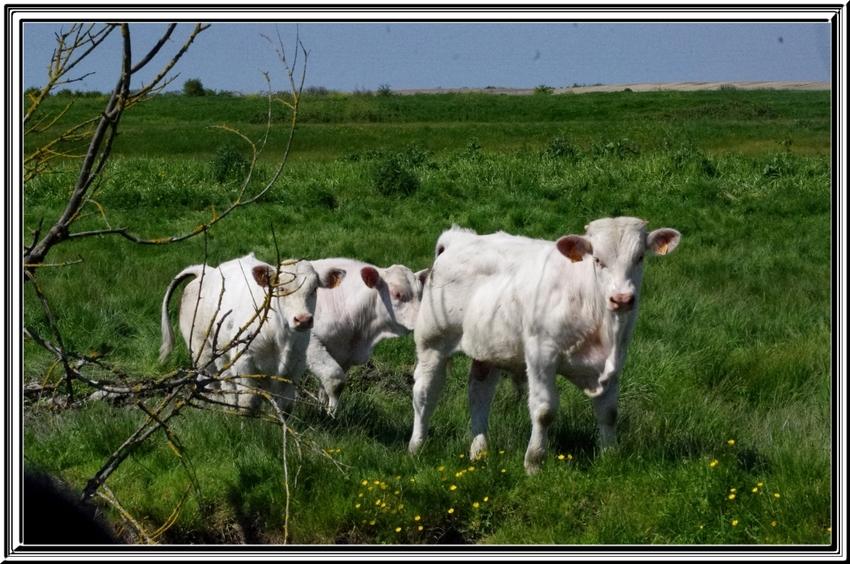 Balade dans les marais entre Brouage et Beaugeay