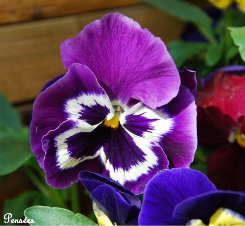 Jolies fleurs d'Avril...