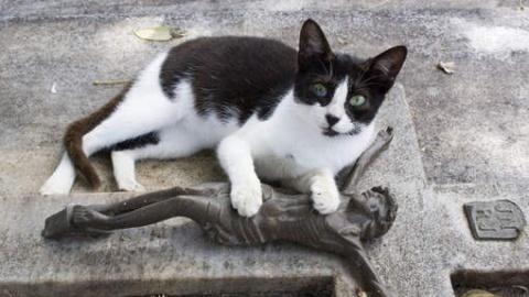 Ce chat se rend tous les jours sur la tombe de son maître