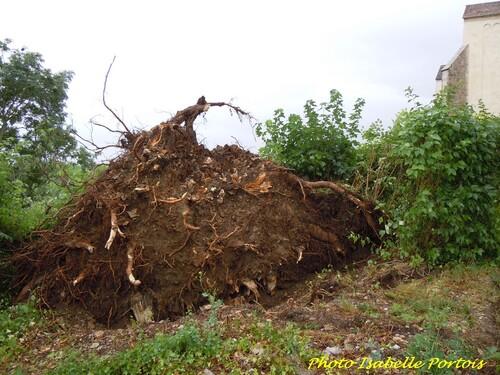 Encore un coup de vent sur le Châtillonnais...