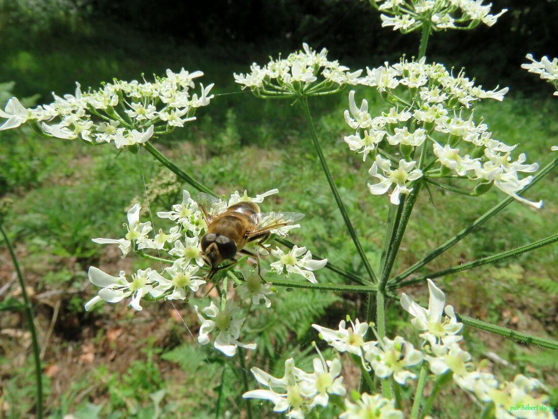 une abeille ou  ?