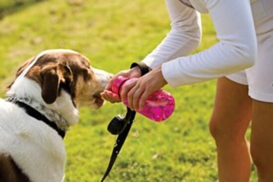 7 conseils pour protéger son chien de la chaleur en été.