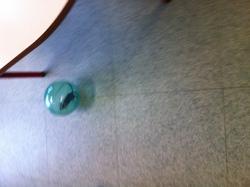 Des gerbilles dans la classe