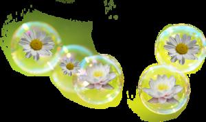 Tubebulles fleurs