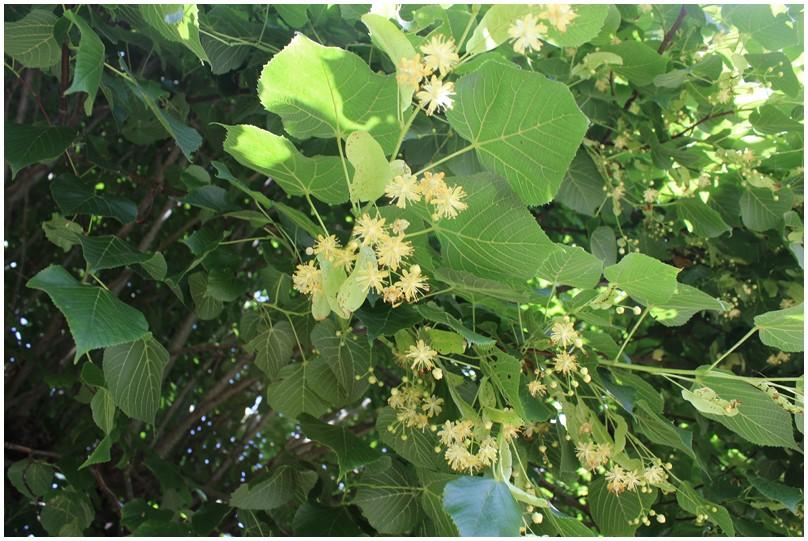 Les fleurs de mon village