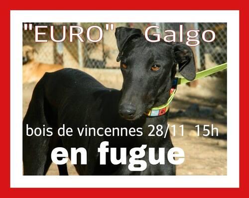 "SOS FUGUE / EURO a fugué le 28/11 "" Bois de Vincennes"""