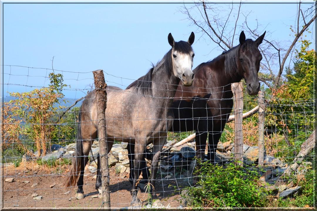 Rencontre estivale avec deux chevaux