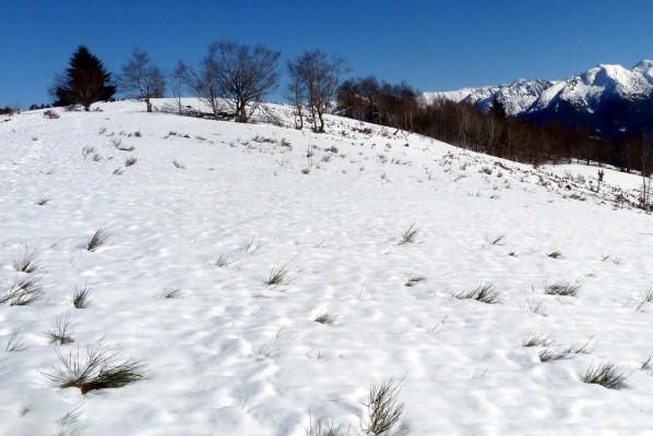 q17---Arbres-et-neige.JPG