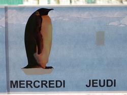 Rituels sur le thème des pingouins et de la banquise