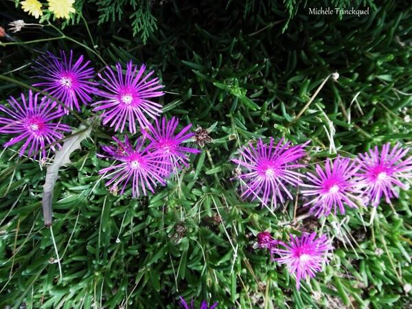 Une balade fleurie dans mon village le 31 juillet...