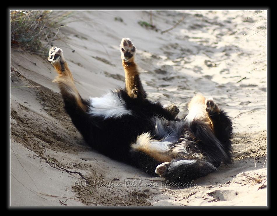 Roulades dans le sable...