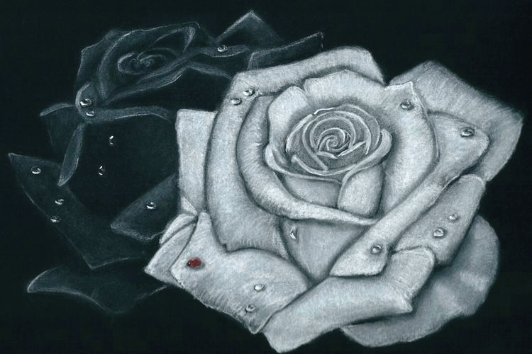 Beautiful dessin de rose en noir et blanc 13 duo de - Rose noir dessin ...
