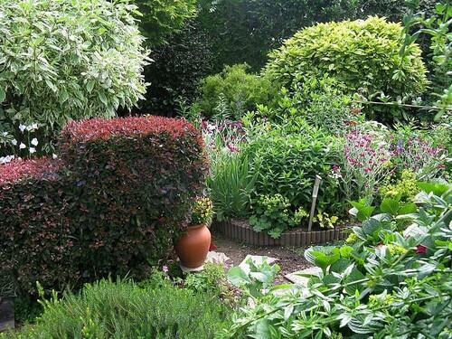 jardin, cornouiller panaché,