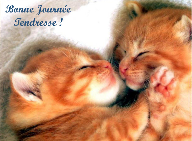 Tendresse des chatons
