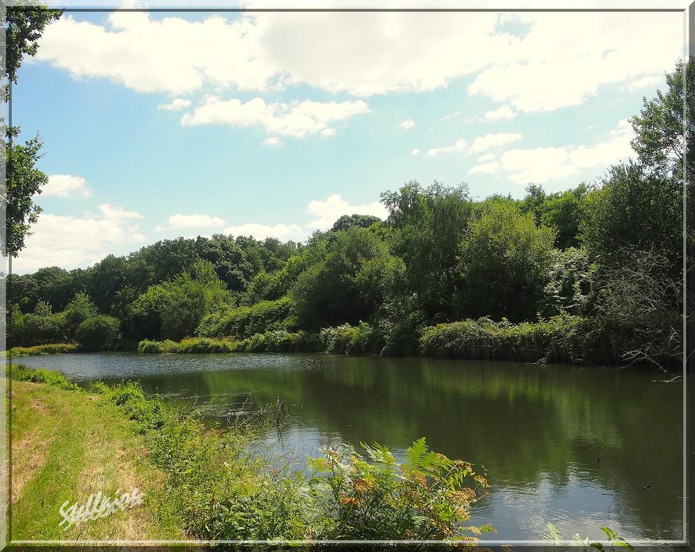 L'étang du Parc de la Gascherie