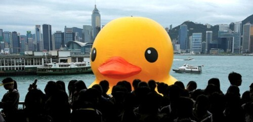 rubber duck Hofman HK 3