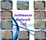 PictureIt 162 - Sniffmouse